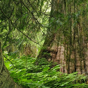 Wild and wonderful...The Ancient Forest