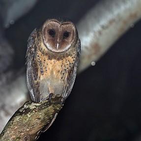 Nocturnal Wildlife with 300mm f4 + FL-600r Flash