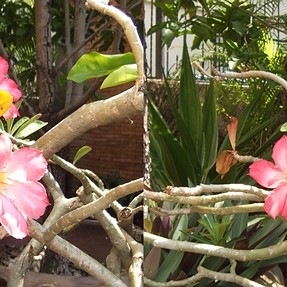 Desert Rose with Fuji Real 3D W3