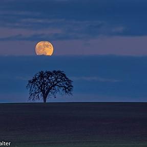 Full moon rise with manual Takumar 135mm f 1:2,5