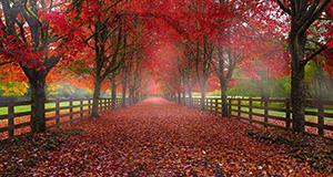 Shooting fall color