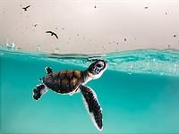 Slideshow: Ocean Photography Awards 2021 finalists