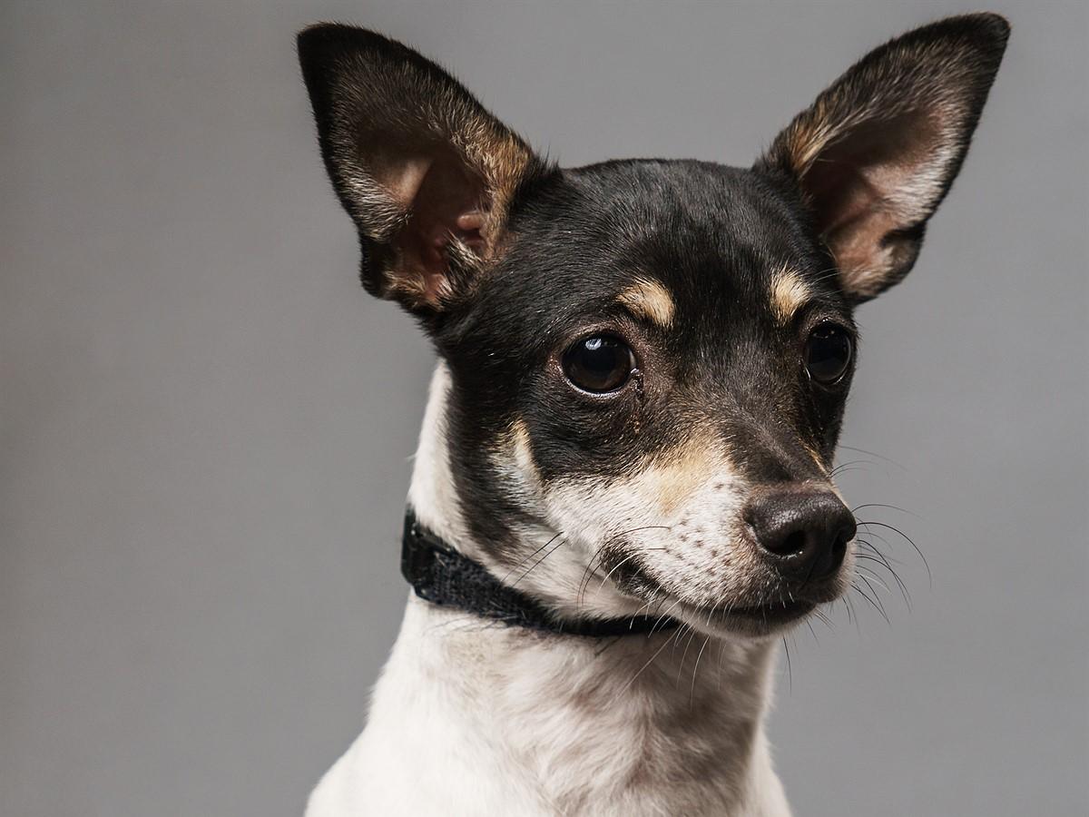 Simple Studio Technique: Pet Portraits