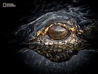 Spectacular editors' picks from early 2016 National Geographic Nature Photographer of the Year entries