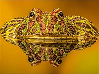 Society of International Nature and Wildlife Photographers crowns competition winners