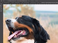 Adobe teases new Sensei-powered Object Selection Tool for easy masks and more