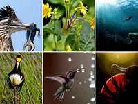 Slideshow: The prize-winning photographs of the 2020 Audubon Photography Awards