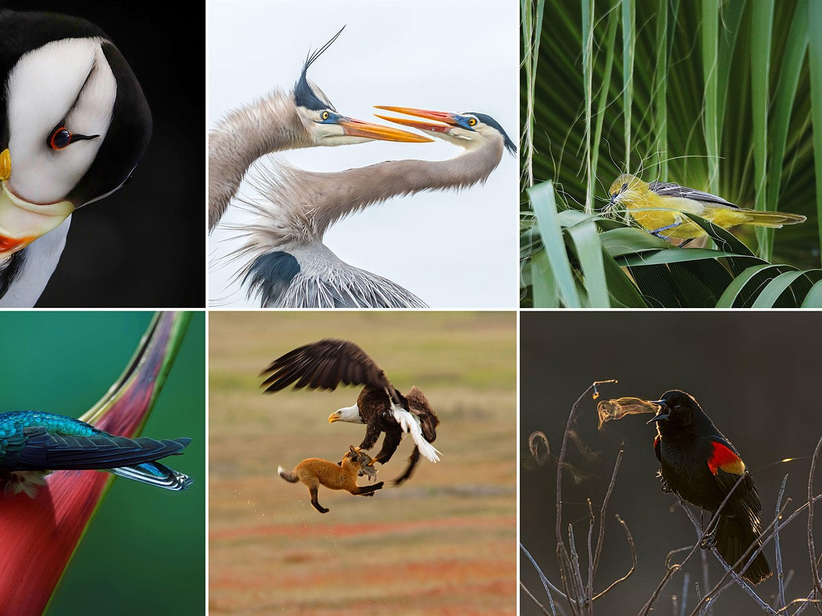 Slideshow: The winners of the 2019 Audubon Photography Awards