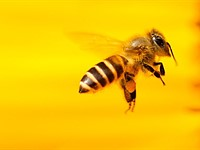 New research on bee vision might help improve digital cameras