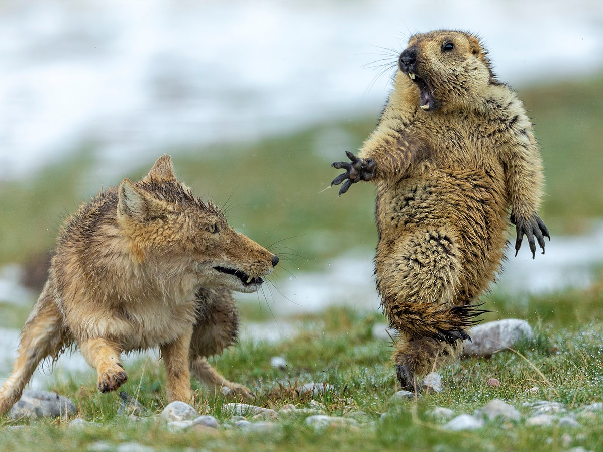 These are the winners of the 21 Wildlife Photographer of the ...