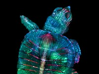 These are the winning photographs of the 2019 Nikon Small World photography competition