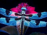 The magic of ultraviolet nature and macro photography