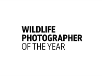 Wildlife Photographer of the Year announces LUMIX People's Choice Award finalists