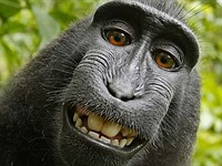 PETA monkey selfie lawsuit lives on, judge rejects attempted settlement