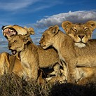 Nat Geo photographer emphasizes important role of photography in conservation