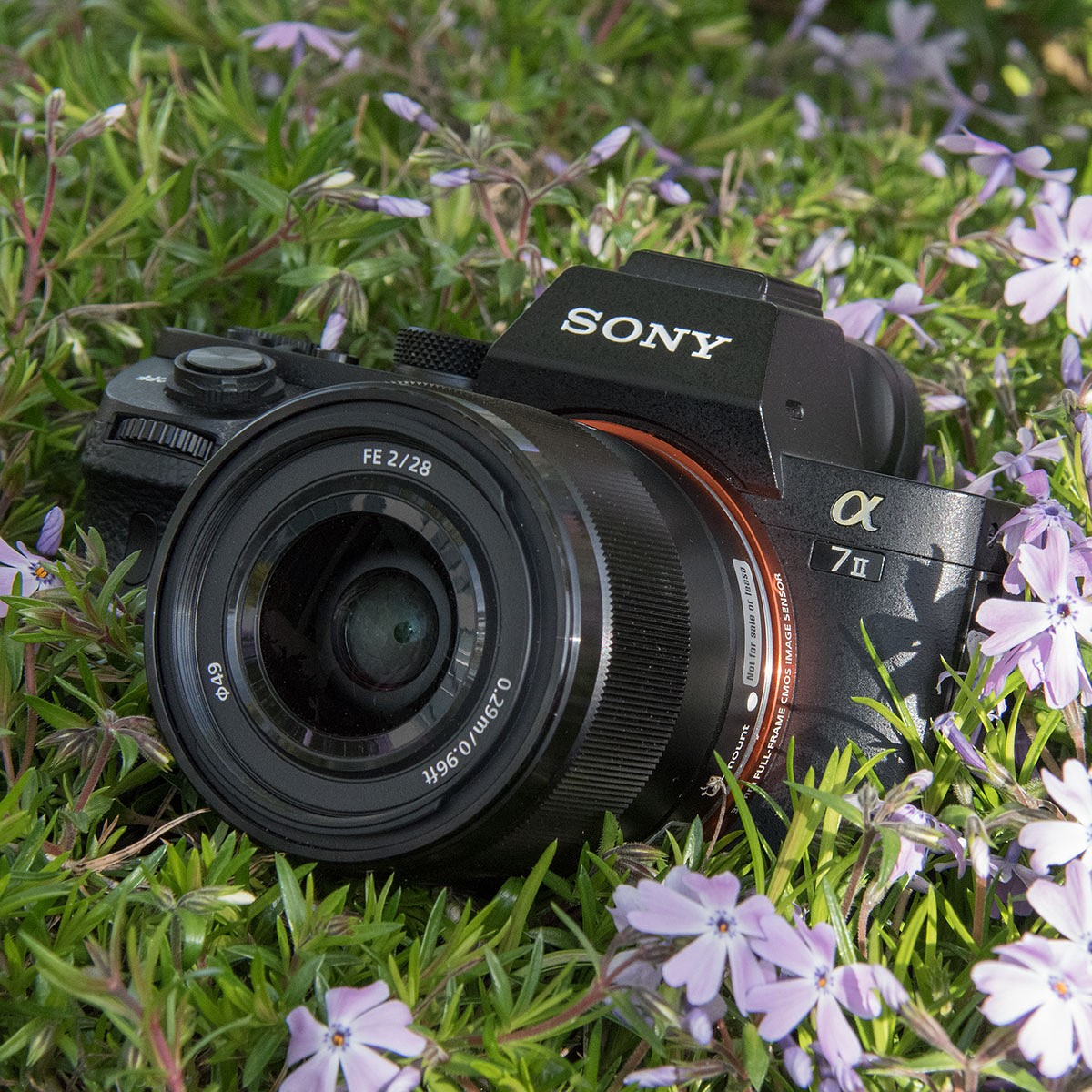 Sony A7 Ii Gains Faster Focus For Adapted Lenses And Uncompressed The Sensors I Used Came Out Of Shelf But An Adaptation Was Needed Raw Digital Photography Review