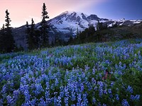 6 tips for better wildflower photos