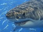 Exposing sharks in a positive light