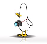 What The Duck #1407