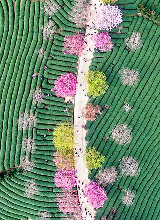 IGPOTY Commended, Beautiful Gardens: 'Notes of Tea Garden' by Ming Li (China)