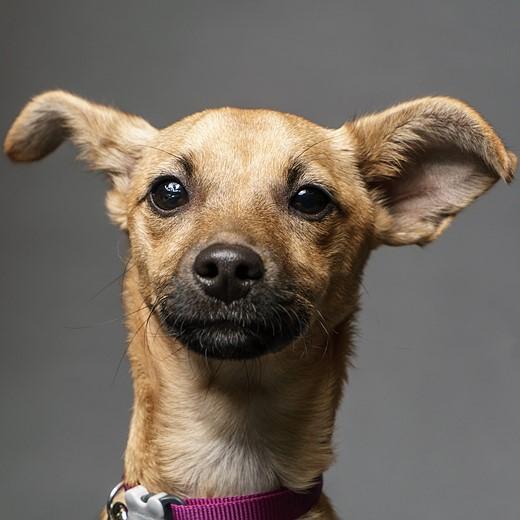 Simple Studio Technique: Pet Portraits 3