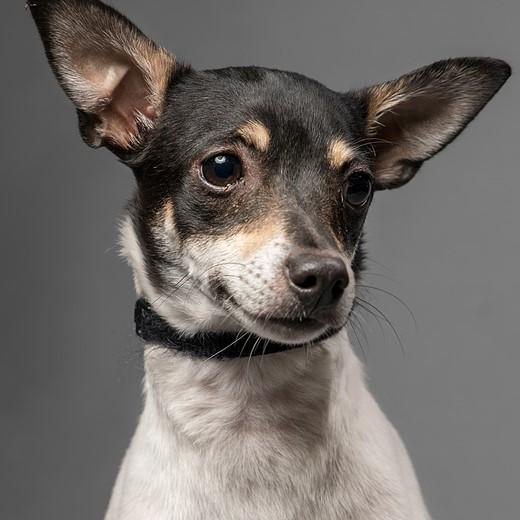 Simple Studio Technique: Pet Portraits 6