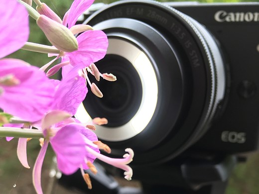 Getting up close: Canon EF-M 28mm macro hands-on review 3