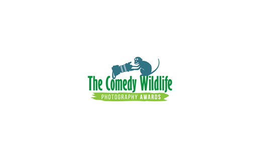 Slideshow: Finalists for the 2020 Comedy Wildlife Photography Awards