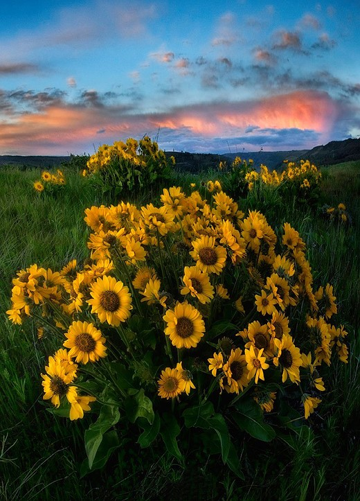6 tips for better wildflower photos 6