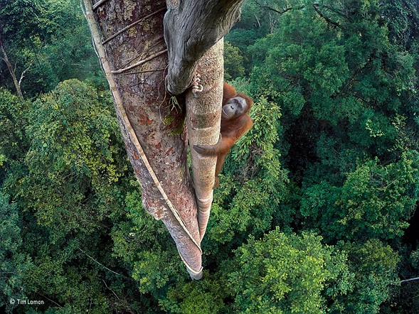Wildlife Photographer of the Year 2016 winners announced