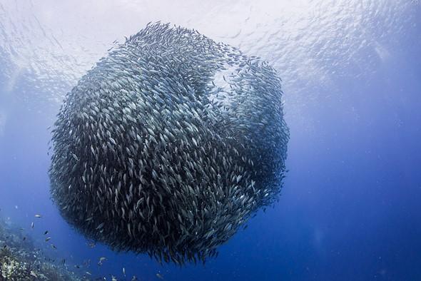Nikon 8-15mm F3.5-4.5E ED fisheye lens impresses in underwater review 2