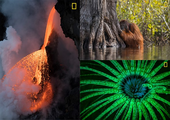 2017 National Geographic Nature Photographer of the Year Winners