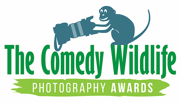 The best entries so far for the 2021 Comedy Wildlife Awards