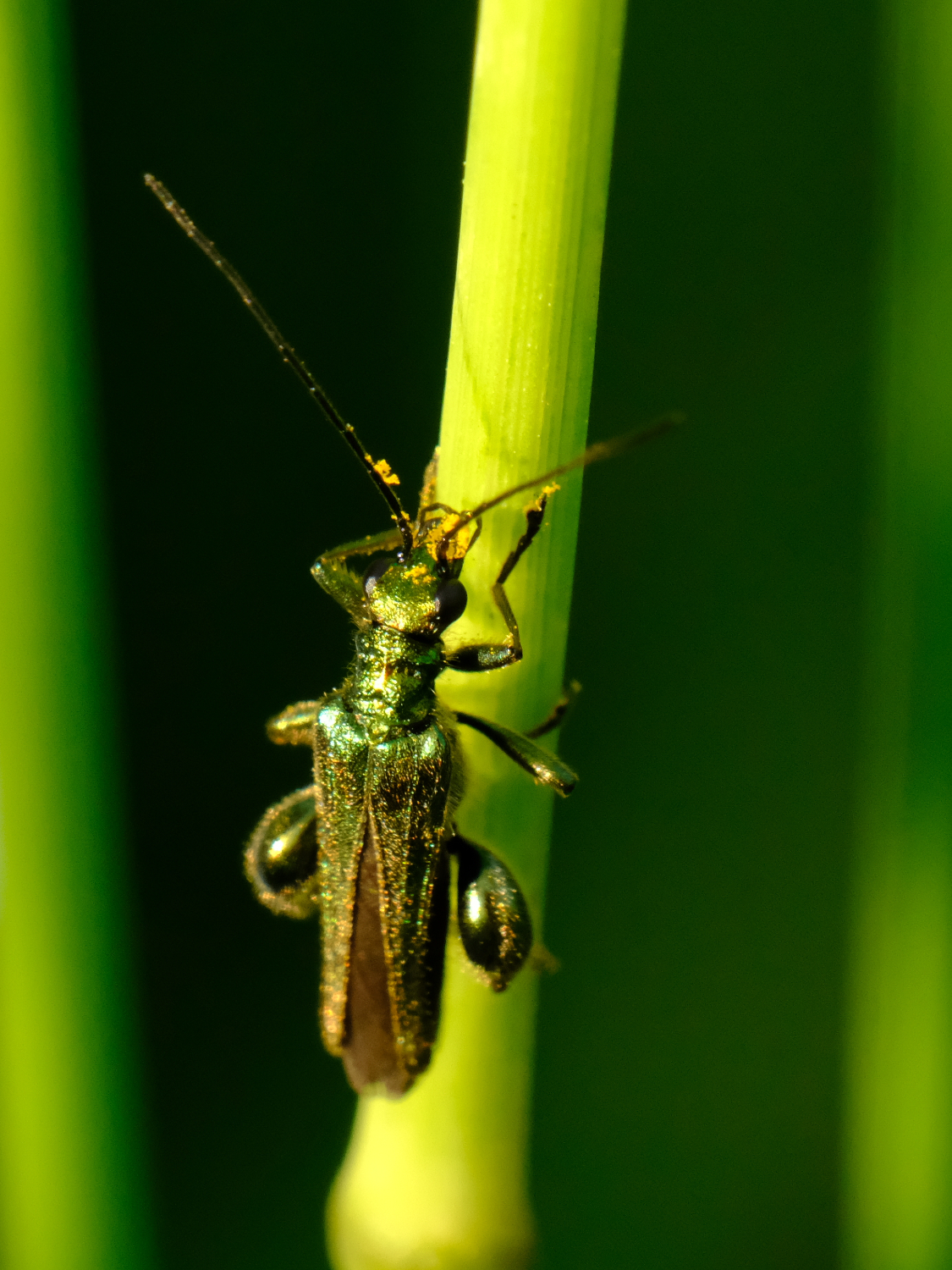 Insect Identification (UK): Nature and Wildlife Photography Forum