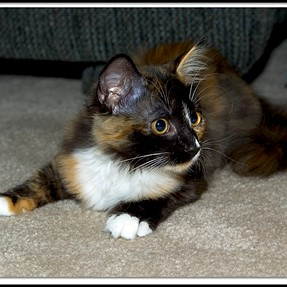 :-)) Sunday Cat! #456 June 26, 2016 ((-: