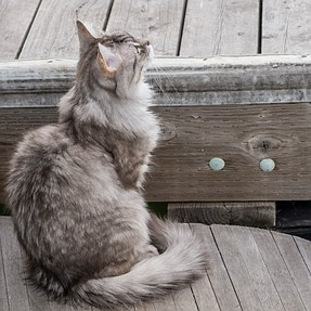 :-)) Sunday Cat! #457 July 3, 2016 ((-: