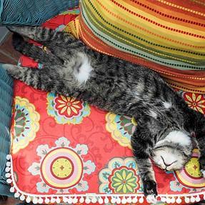 :-)) Sunday Cat! #463 August 14, 2016 ((-: