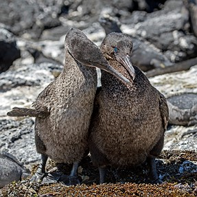 Galapagos, dream destination for animal and bird photographers