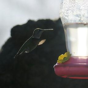 First Hummingbird Photos, New G3X