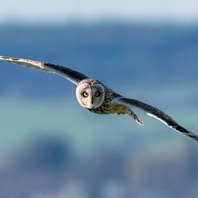 OIF, Owls In Flight