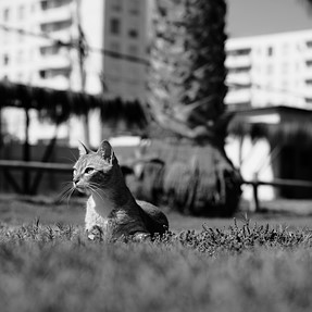 50mm F2...just a cat but question is, front focus?