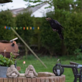 Tried high speed sync for the first time today with my Fuji  XE1 Minolta 70 210 beer can manual focu
