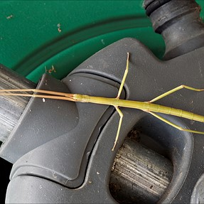 What sticks on a garden hose reel?...............