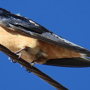 G3X--Unidentified Bird