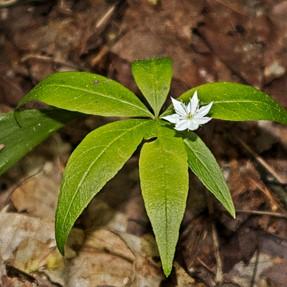 G5X for Macro of Wildflowers