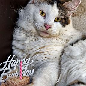 :-)) Sunday Cat! #507 July 2, 2017 ((-: