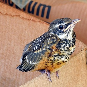 Baby Robin Visited Today...