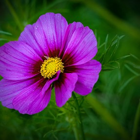 One Flower...
