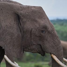 XT2 with 50-140 does Safari in Kenya