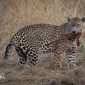 Some photos from a recent safari